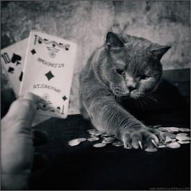 kartinki-foto-kart-poker25